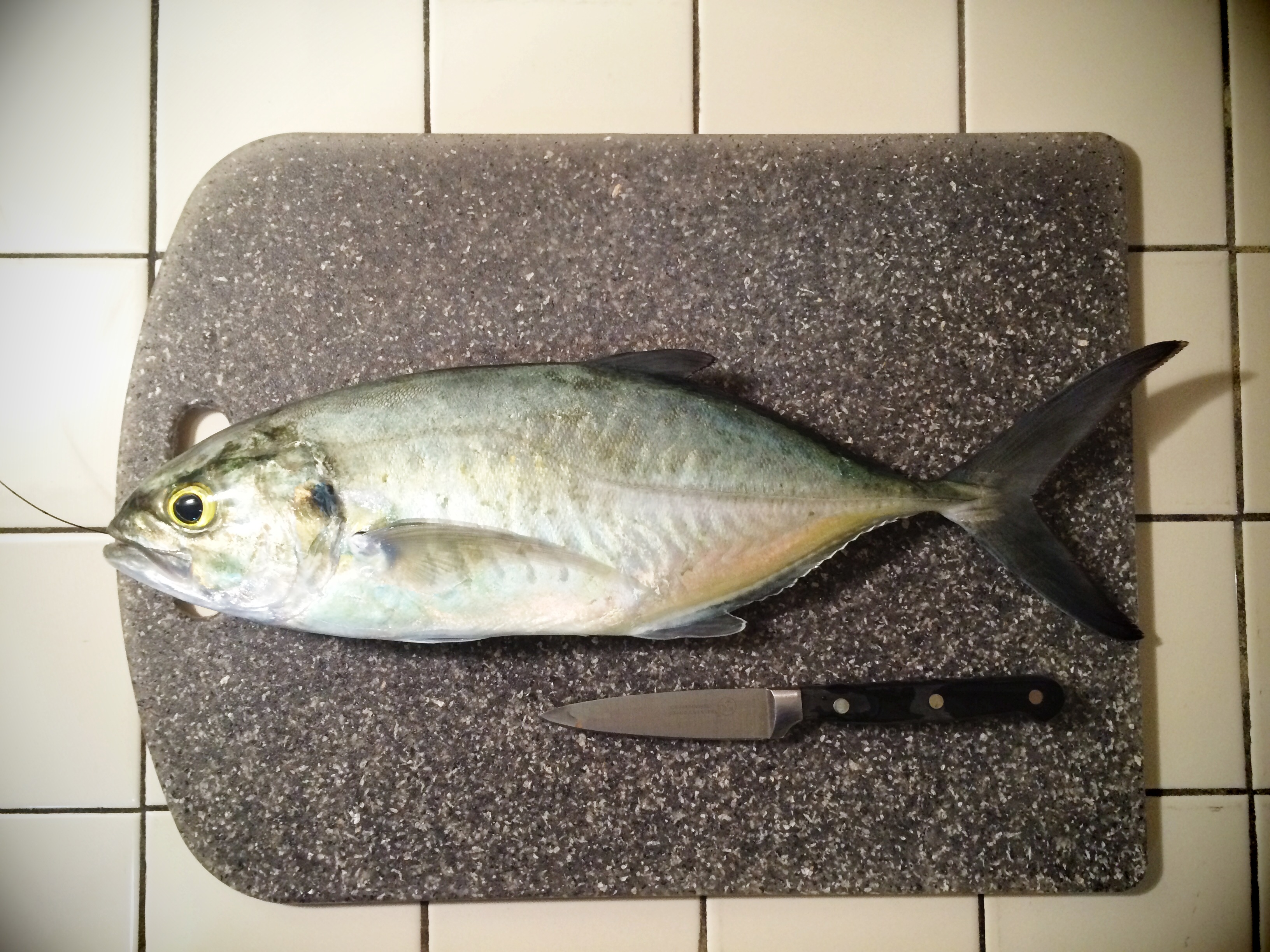 Whole Lesser Amberjack fish is about to be dinner!
